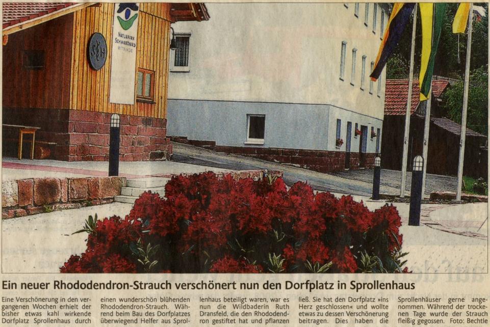 2008-06-06-enztaeler-dorfplatz_rhododendron